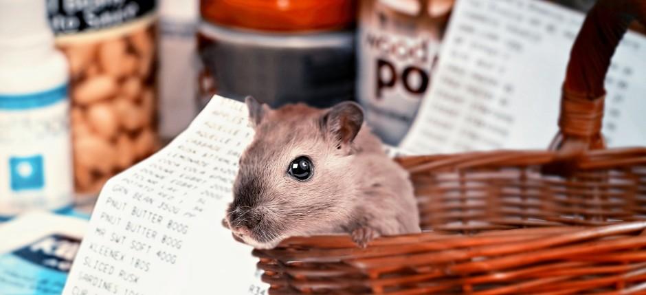 hamster-shopping-4940922_1920